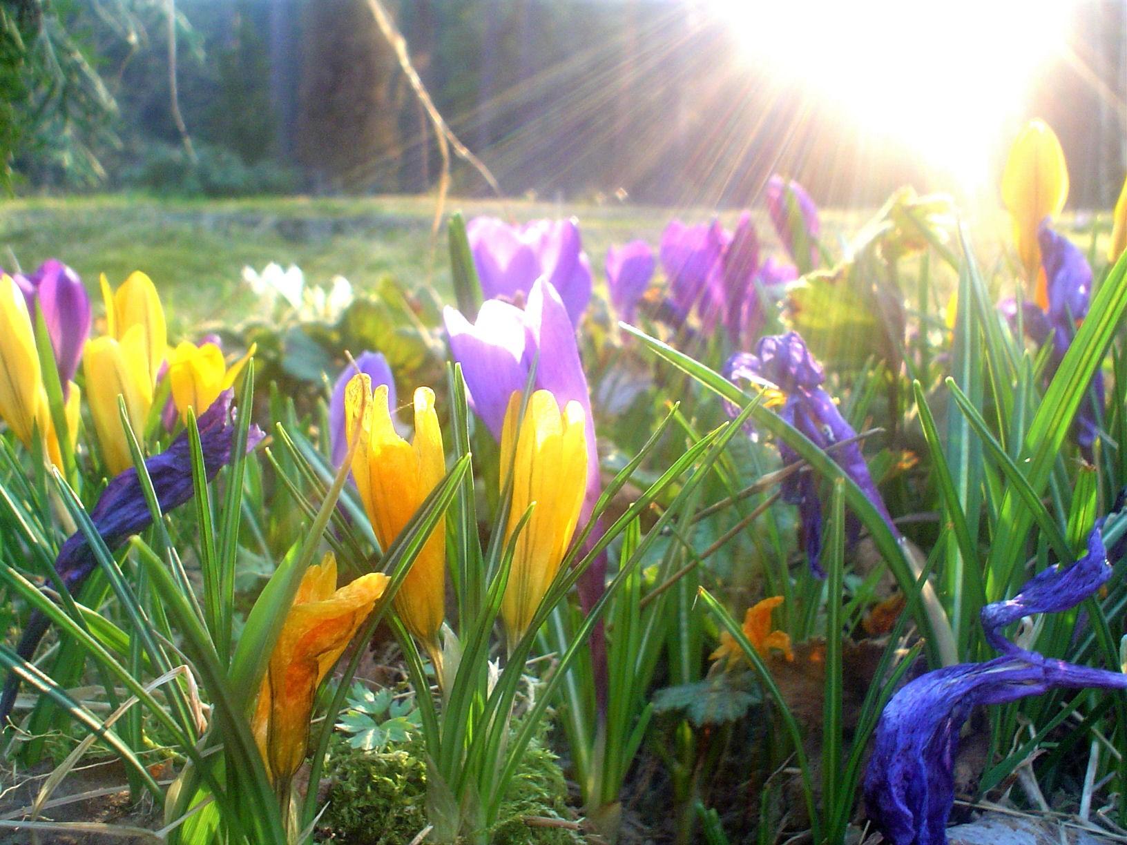 Kevät.jpg