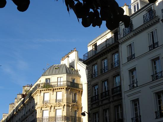 Pariisi-terkut