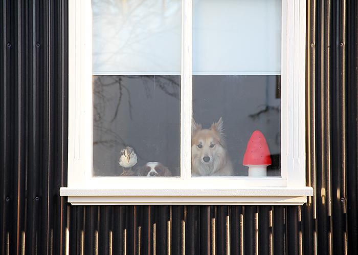 animalfriends.jpg