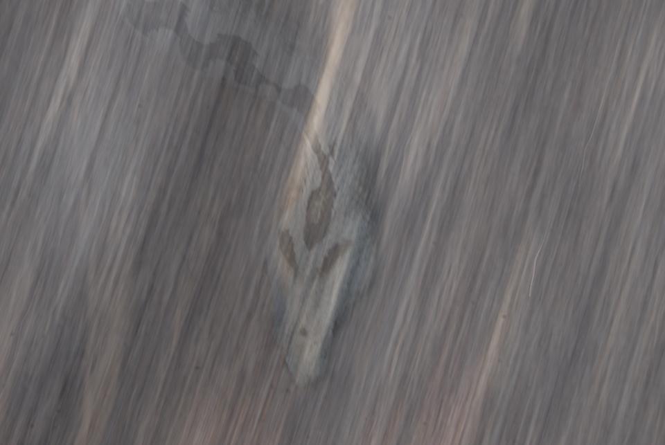 2012-06,07 Käärme kivessä netti.jpg