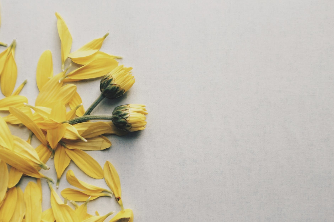 yellowflowerssmall.jpg