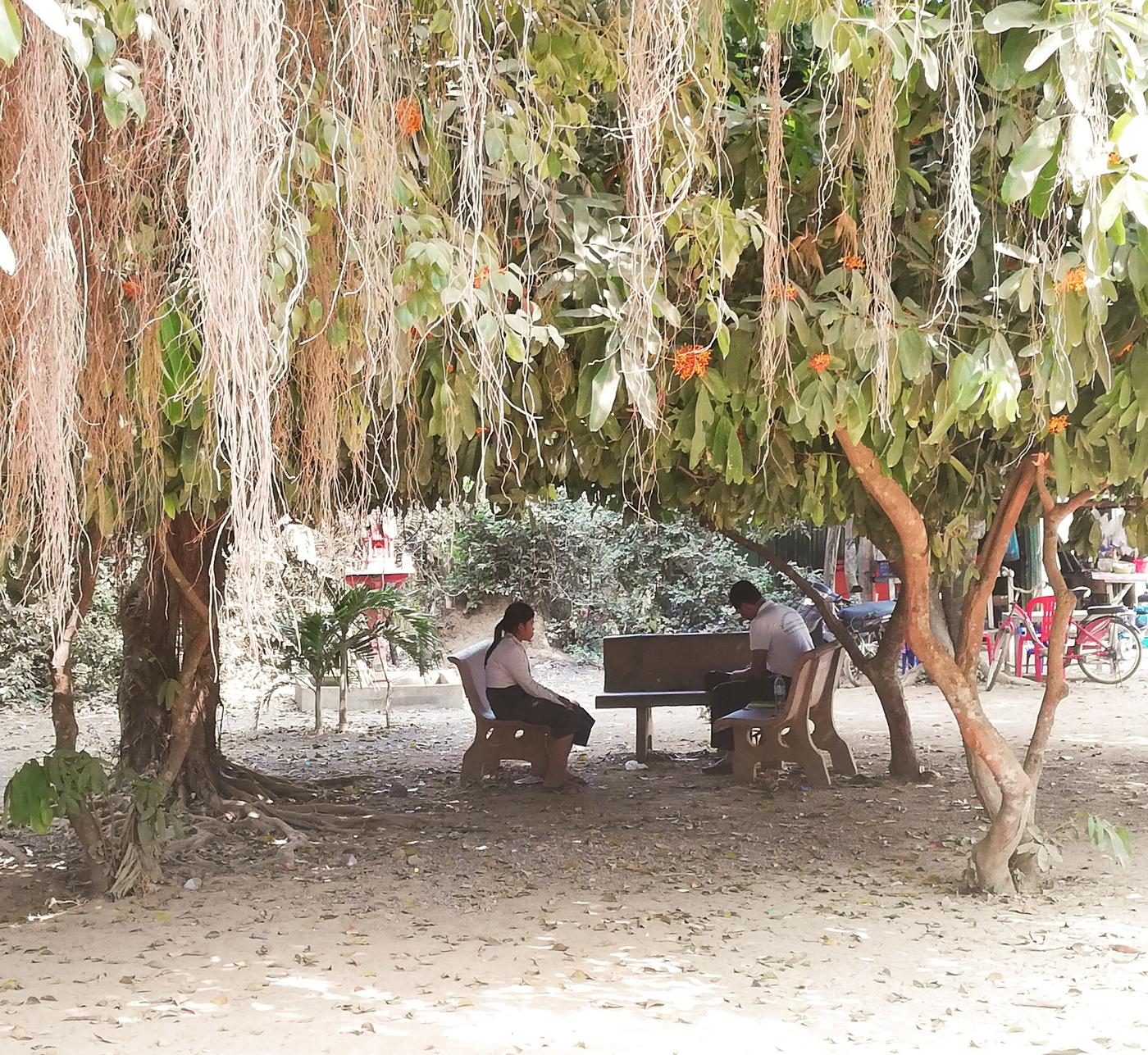 cambodia tree.jpg