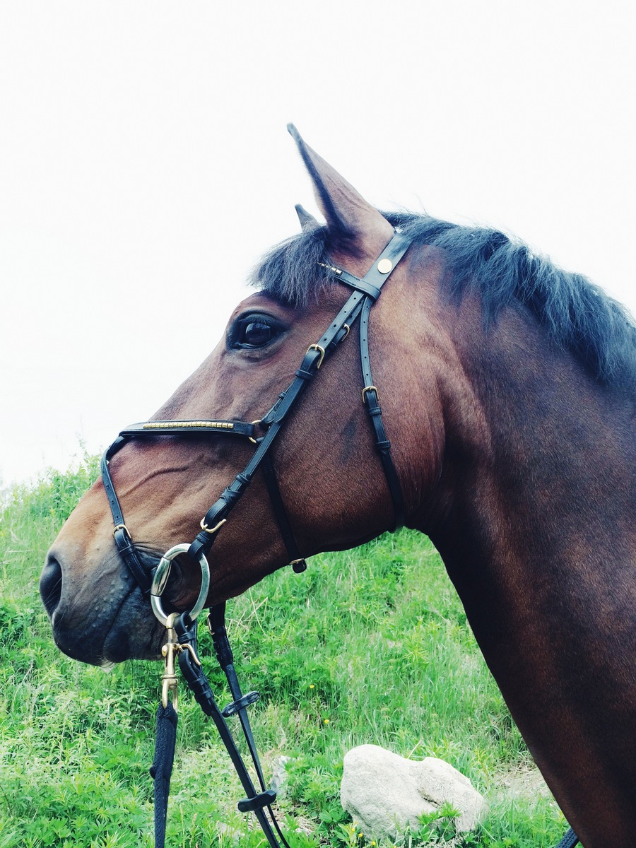 hevoskuulumiset