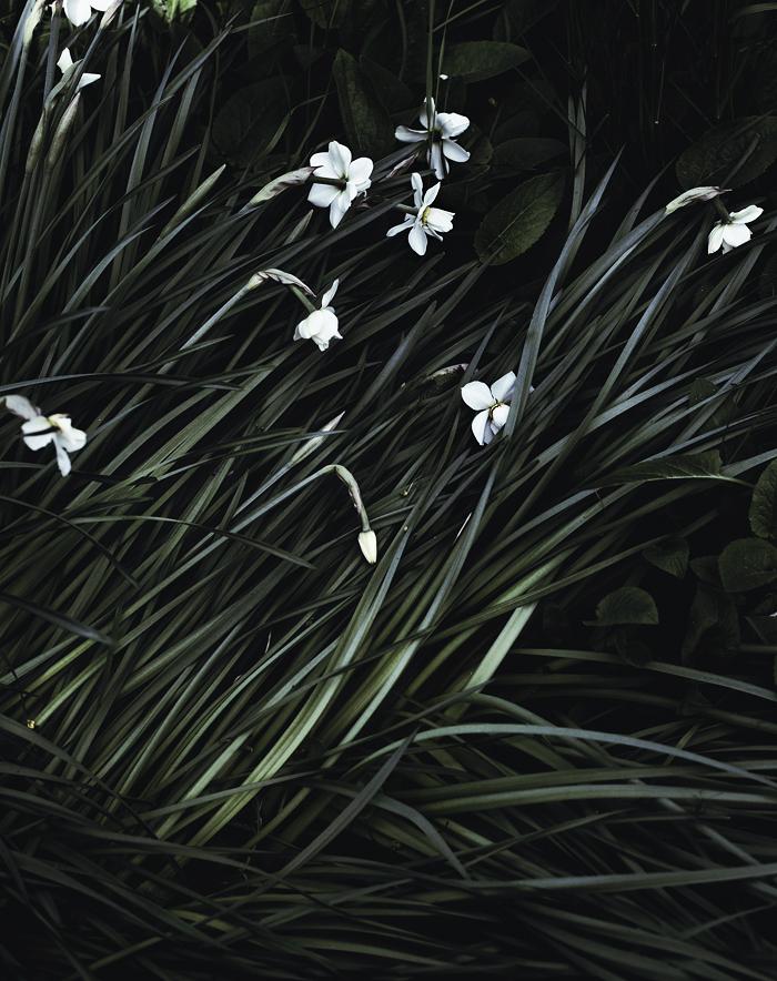 gardeners_suvisurlevif.jpg