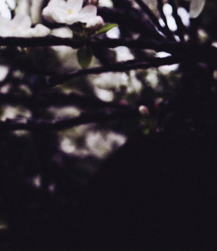 Blossoms1_suvisurlevif.jpg