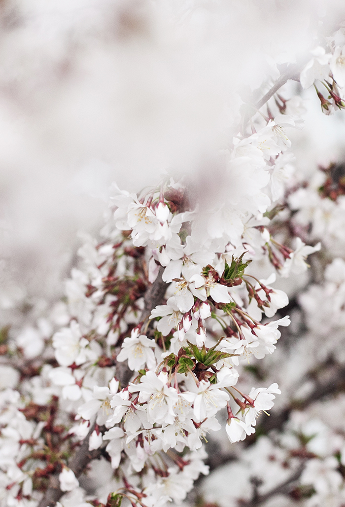 blossom_suvisurlevif.jpg