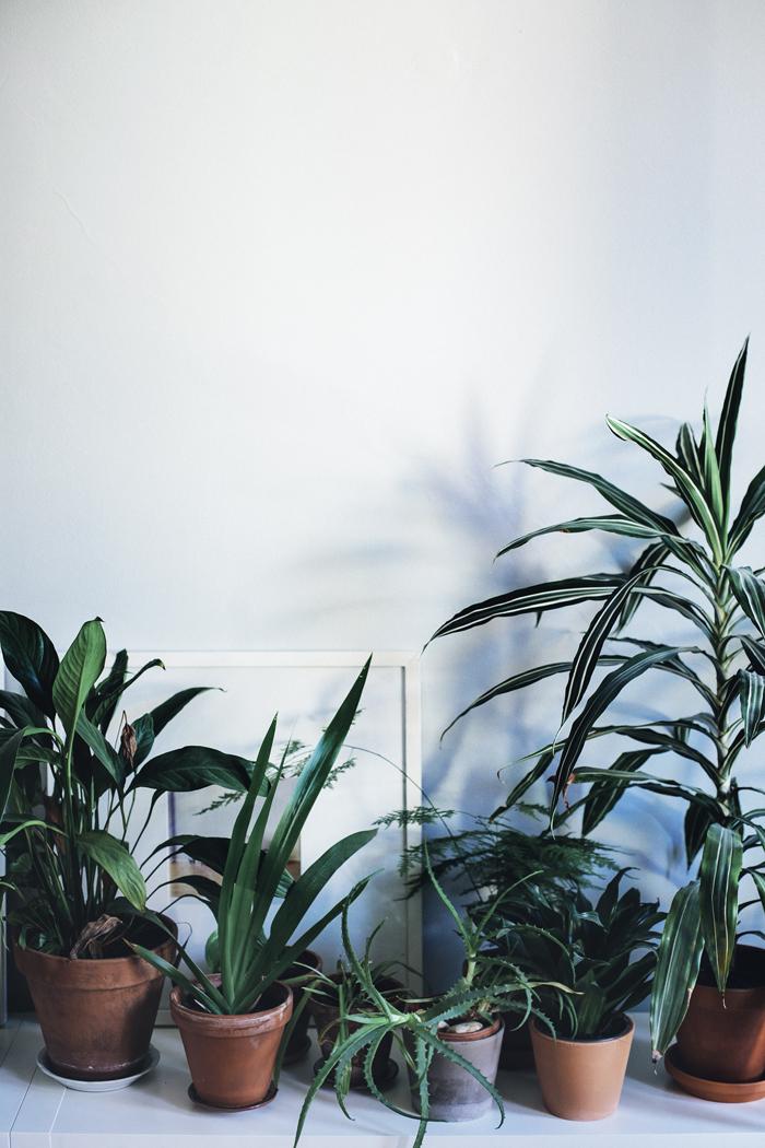 kasvit_suvisurlevif.jpg