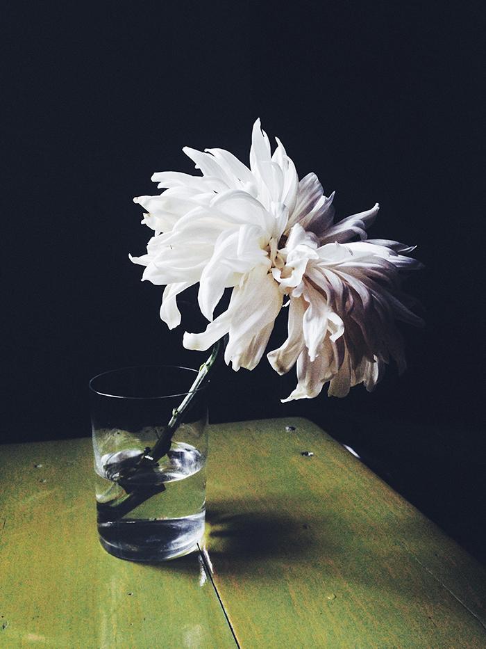 Krysanteemi.jpg