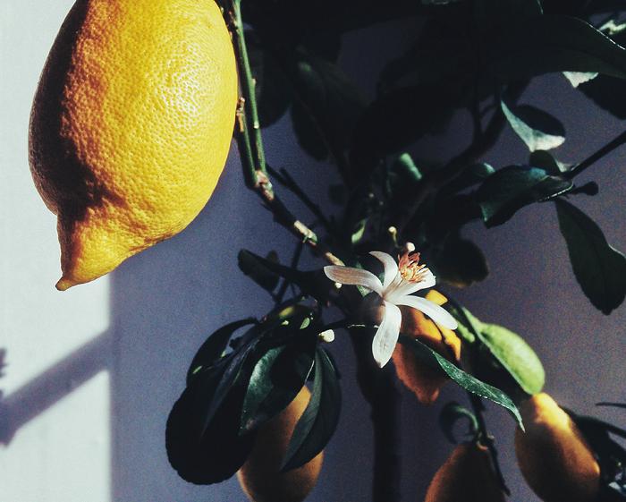lemon_suvisurlevif.jpg