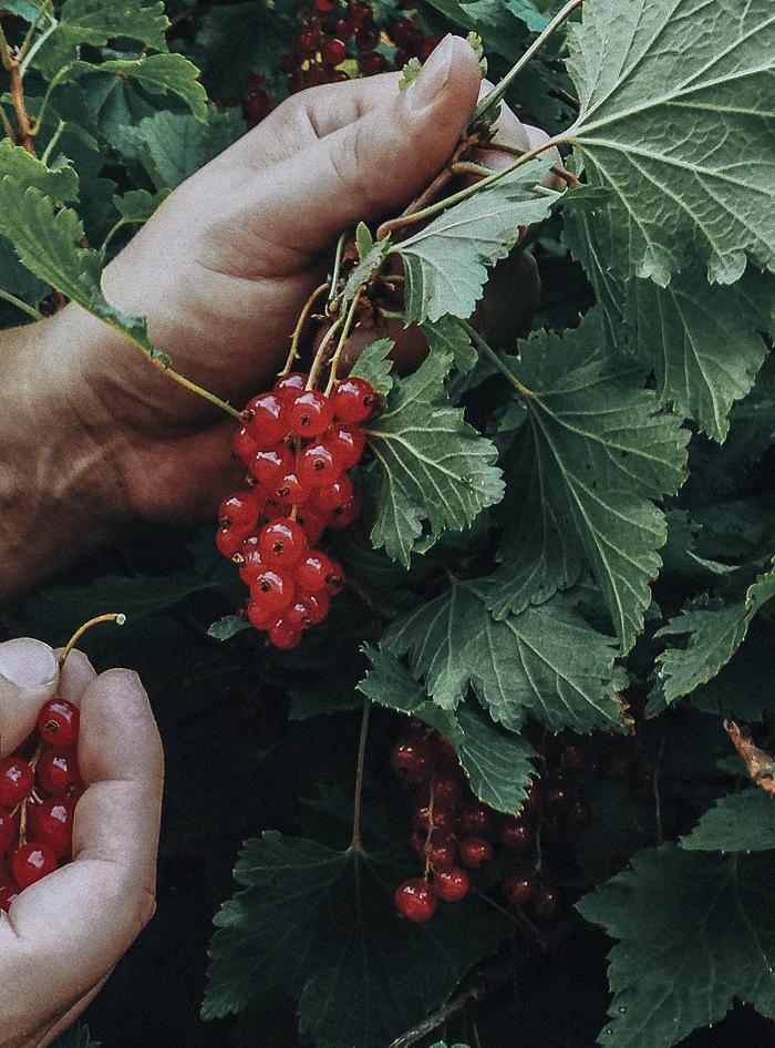 Marjat / Berries