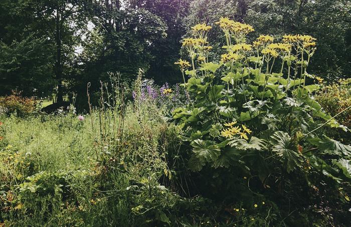 puutarhassa_suvisurlevif.jpg