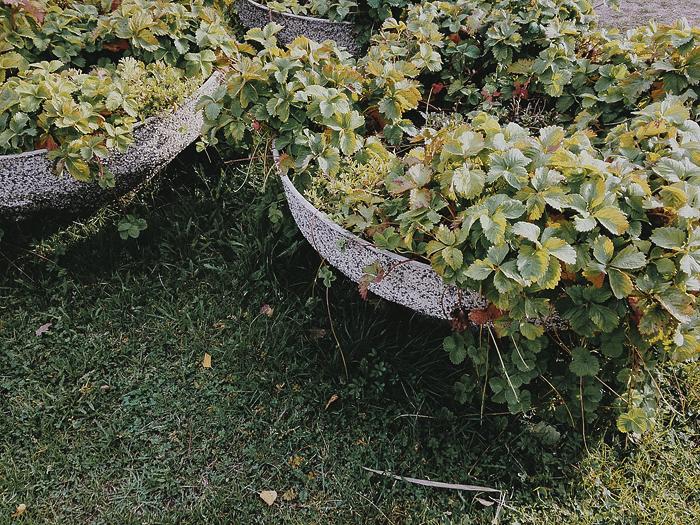 puutarha1.jpg