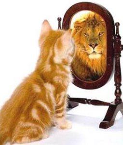 cat-lion-mirror.jpg