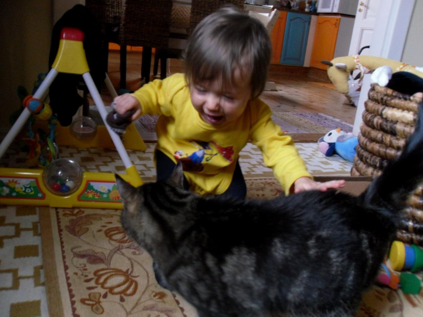 kissalle sukka.jpg