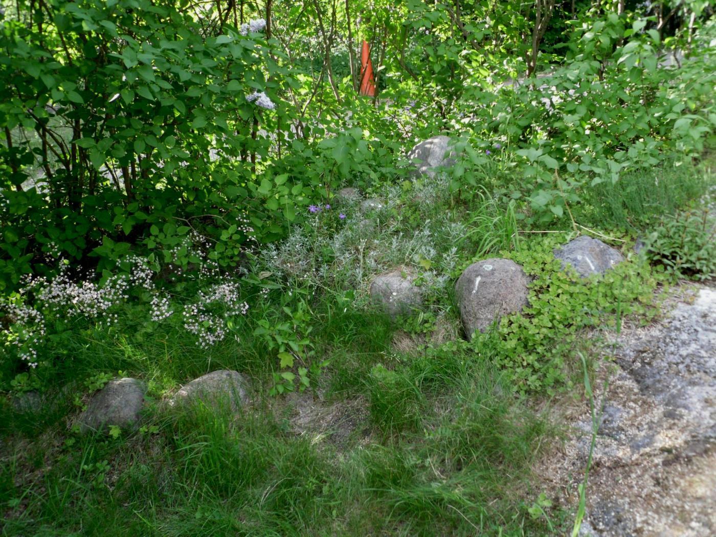 kivikkopuutarha.jpg