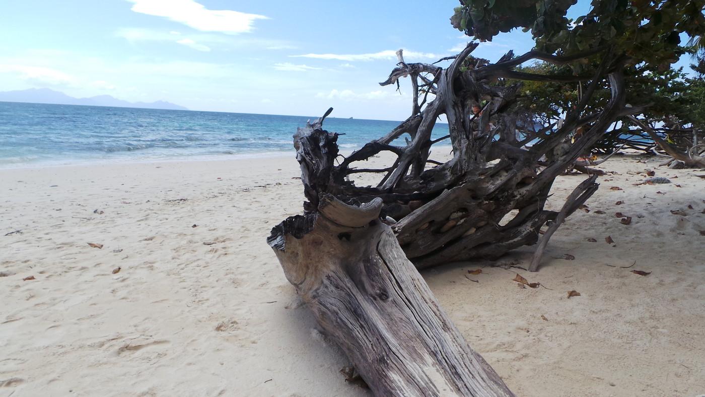 puu rannalla.JPG