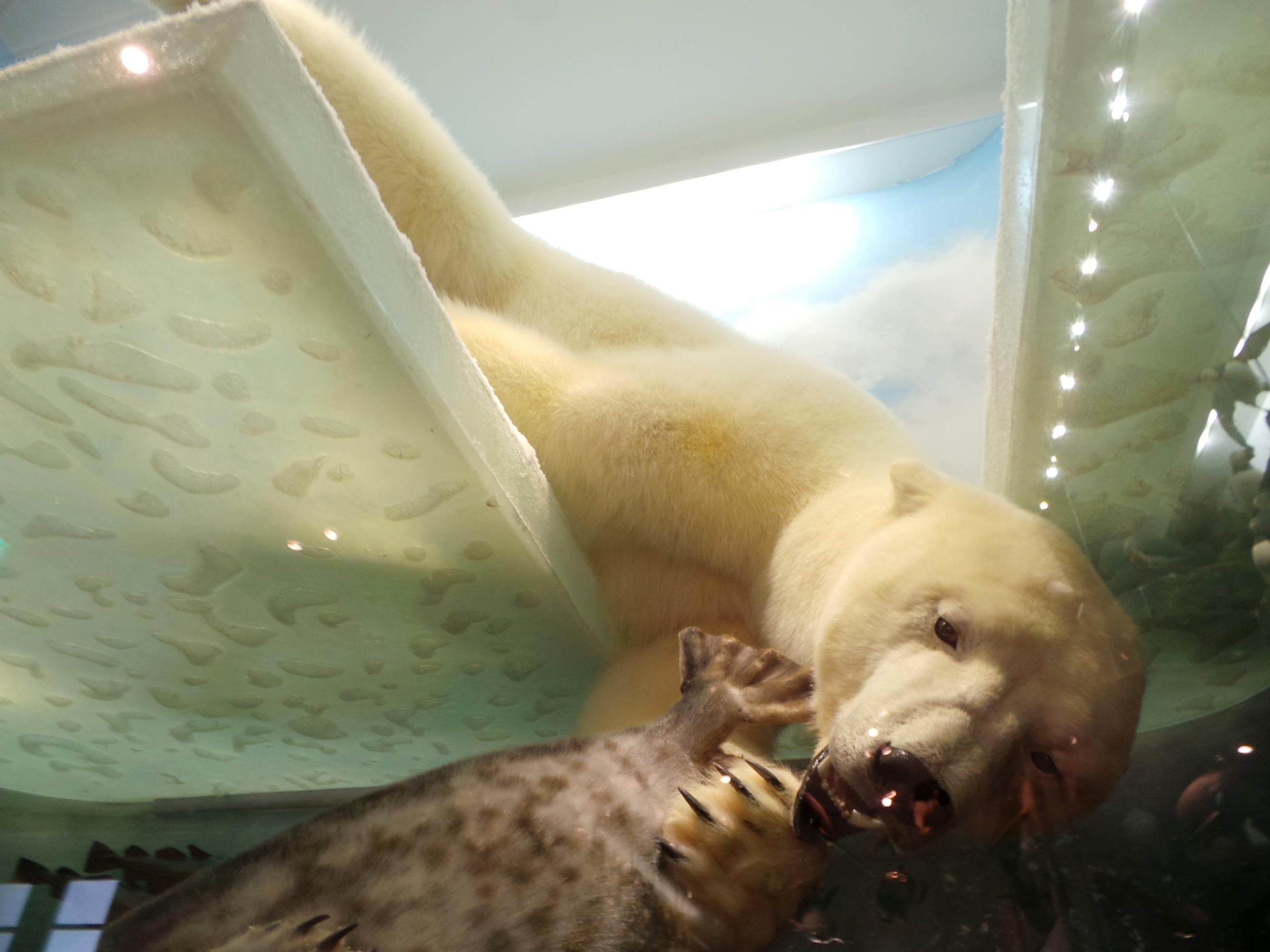 jääkarhu.JPG