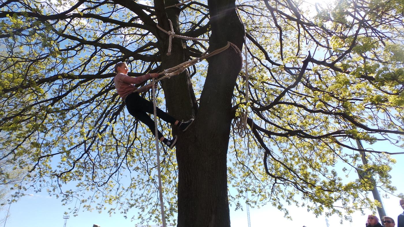 circo esitys puussa.JPG