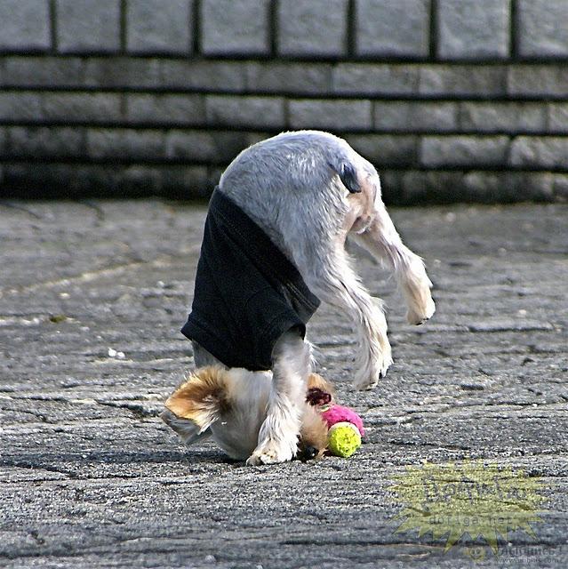 funny-puppy-1151.jpg