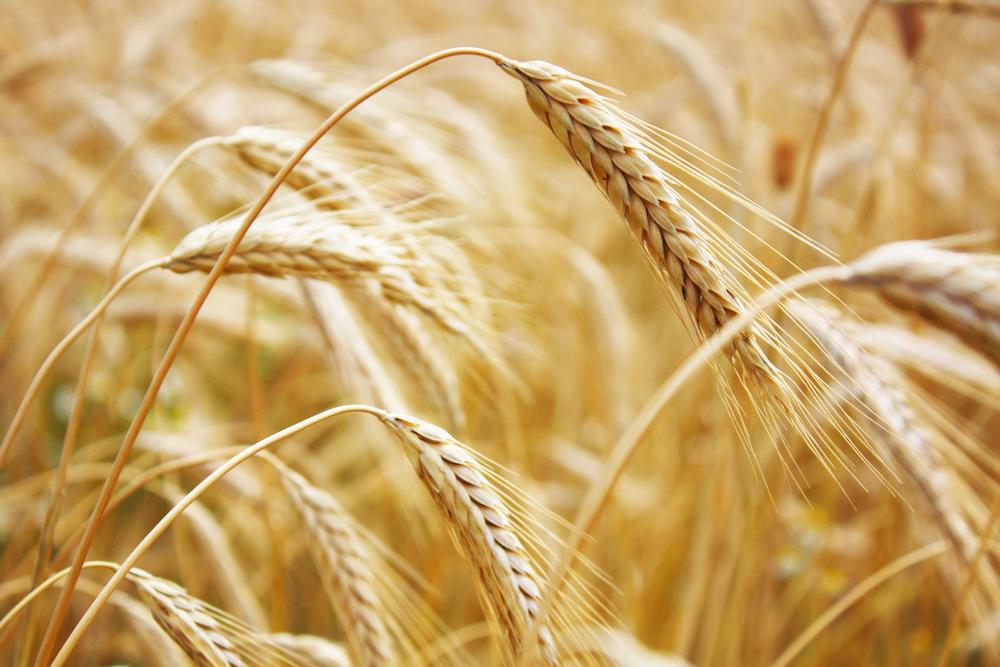 us-wheat-lending.jpg