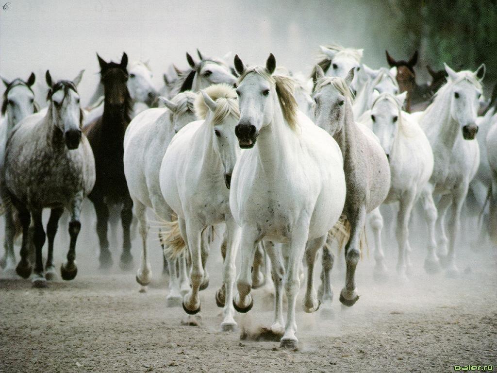 herd_of_white_and_black_horses.jpg