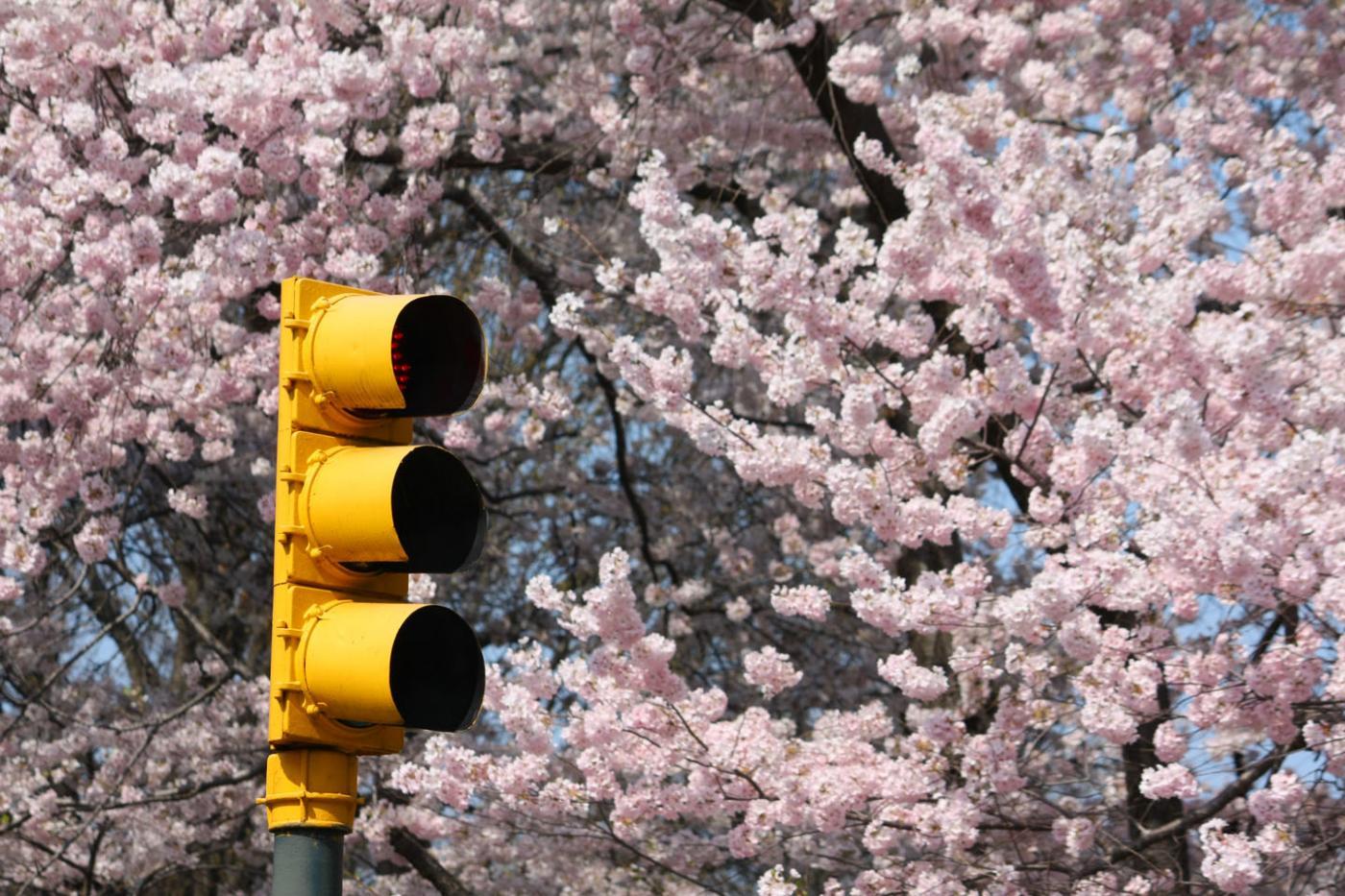 New York spring.jpg