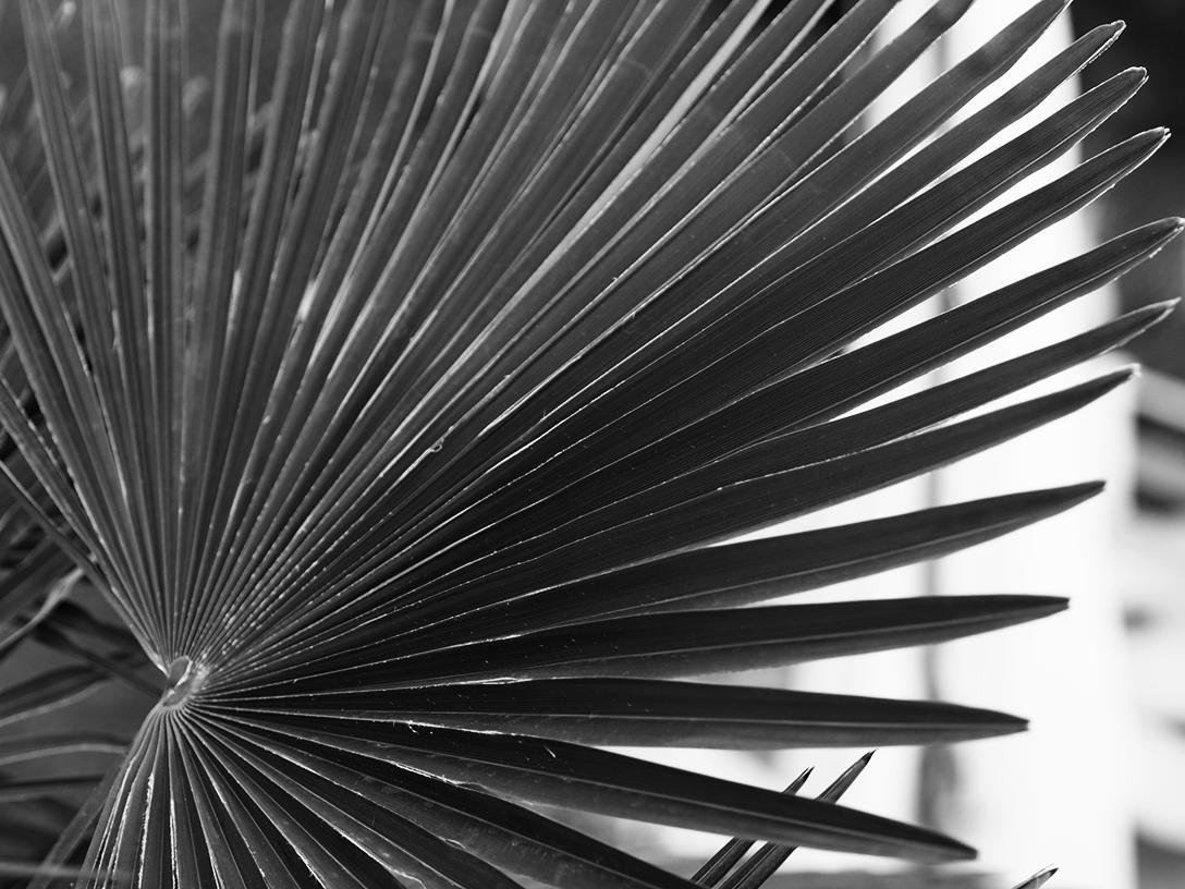 palmtree-bw.png