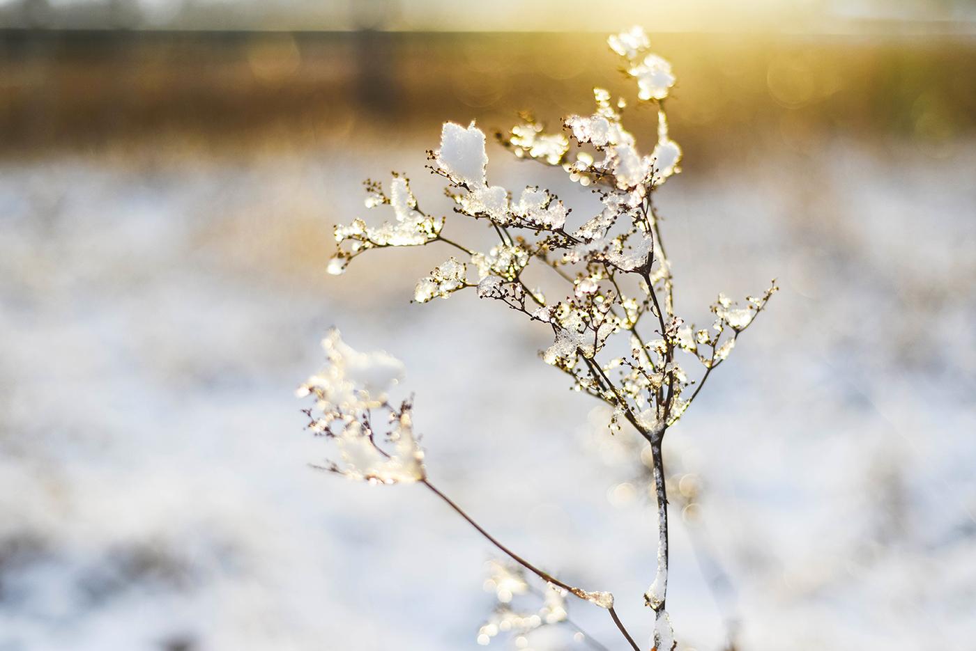 suomi100-itsenaisyyspaiva-sundayblondie-6.jpg