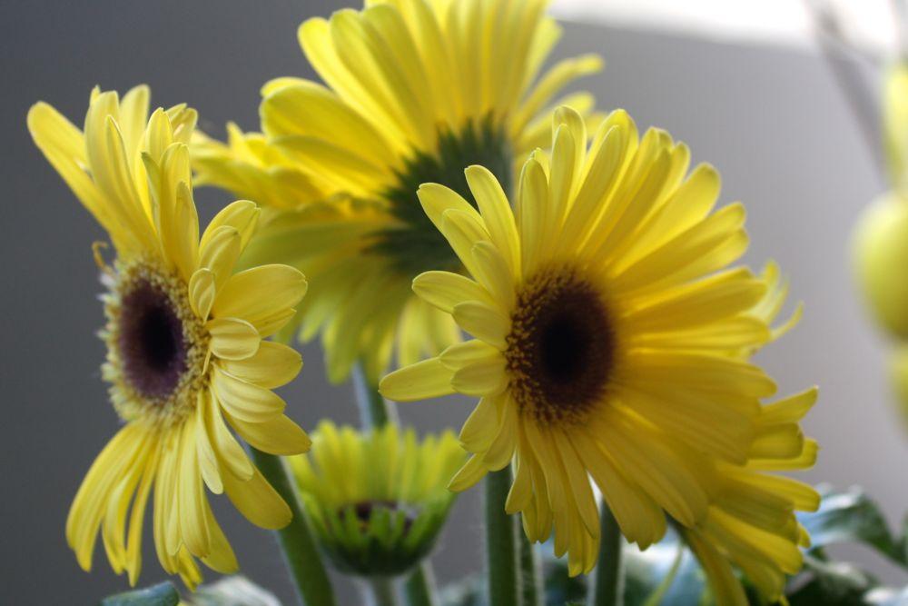 keltainen_kevat.jpg