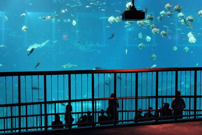 Akvaario_10.jpg