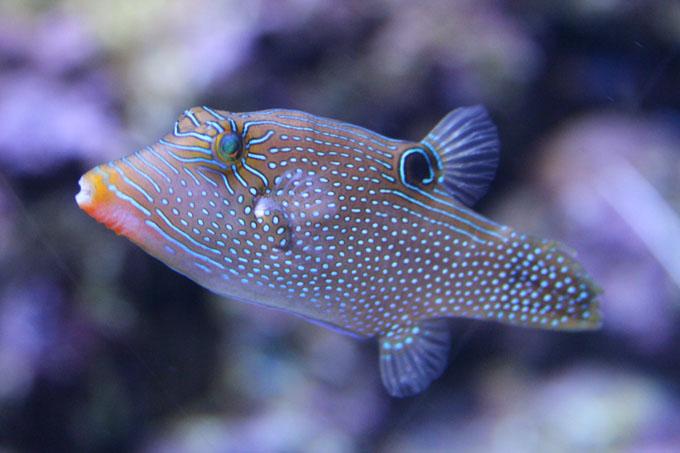 Akvaario_14.jpg
