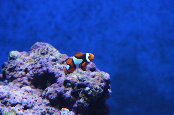 Akvaario_15.jpg