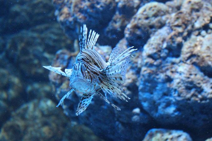 Akvaario_16.jpg