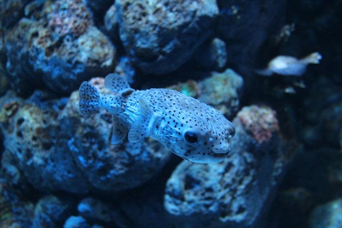Akvaario_17.jpg