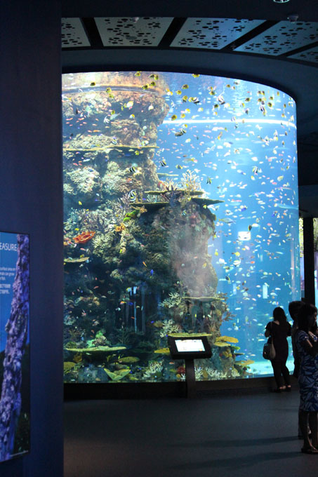Akvaario_5.jpg