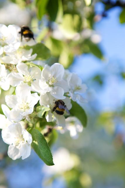 Kukat ja mehiläiset sekä loppukesän sato mielessä