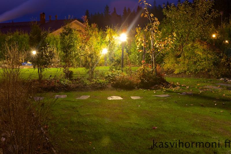 Syysvalaistus_Kasvihormoni.fi 3.jpg