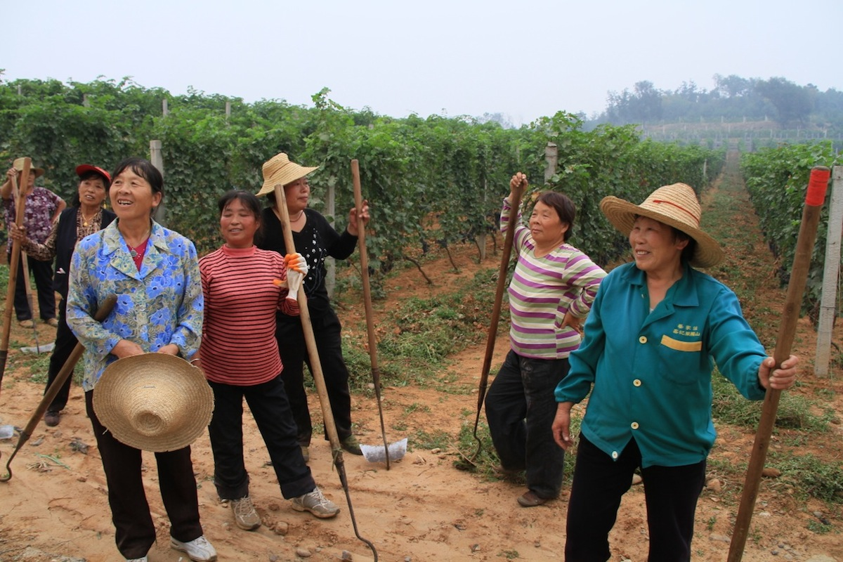 Workers at Chateau Changyu AFIP near Beijing 2[2].jpg