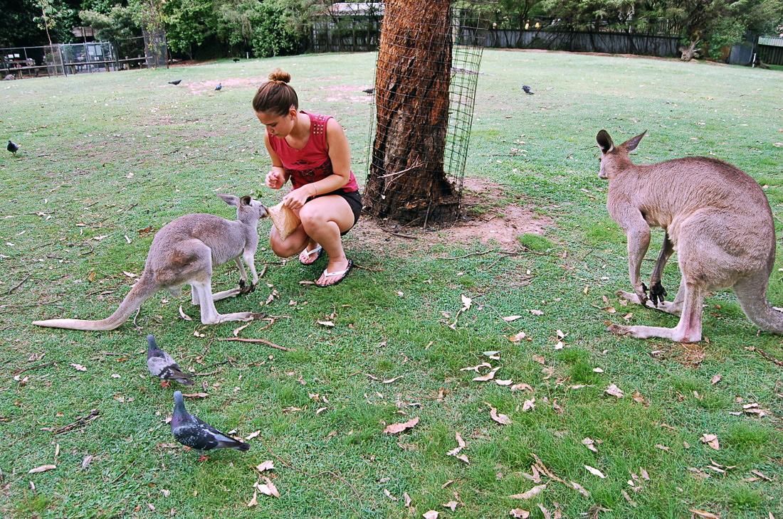 Ajatukset Australiassa ja ensikeväässä