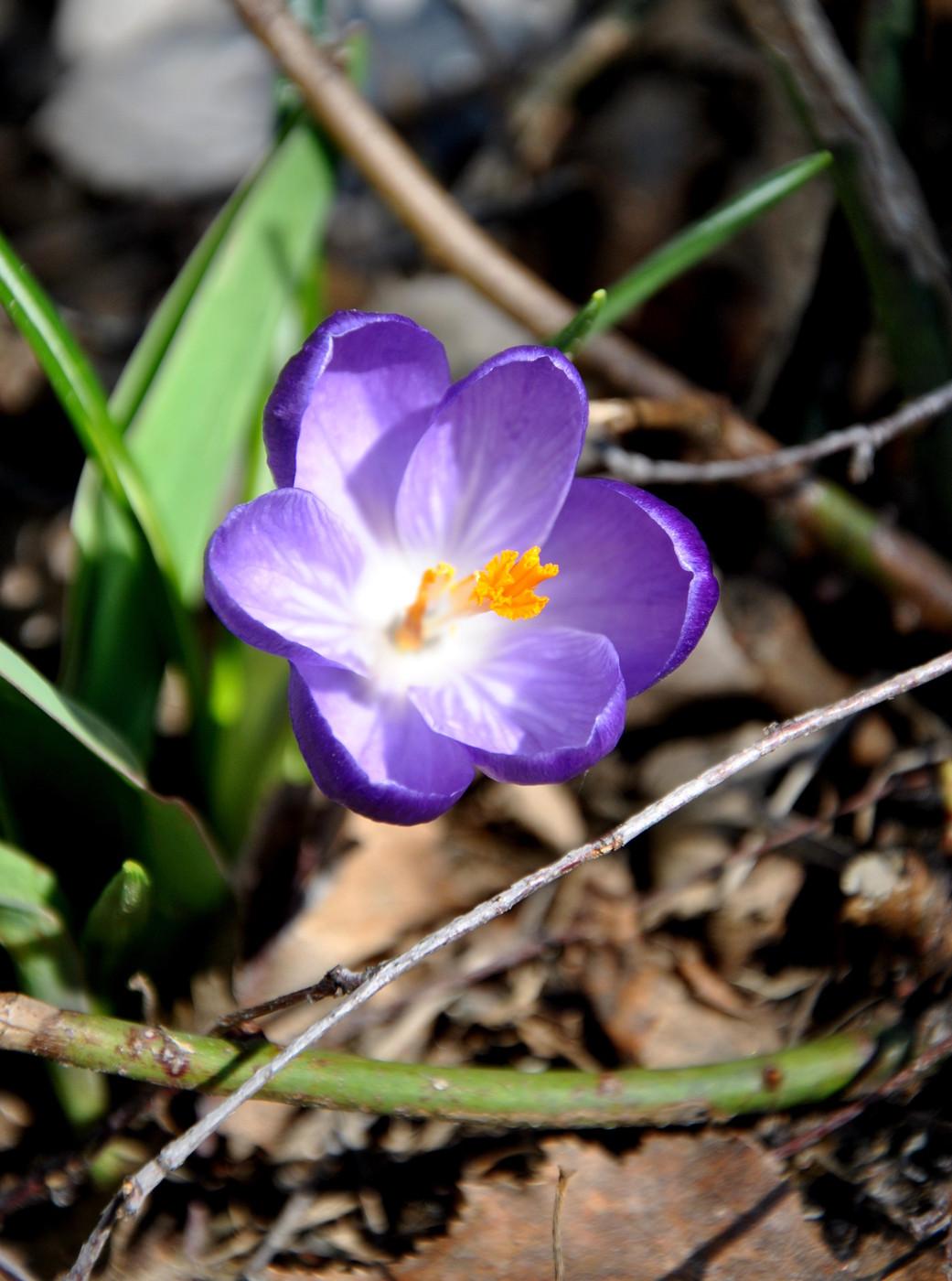 Askel kevääseen