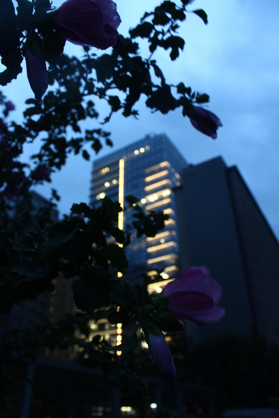 Beijing flowers & towers (1).JPG