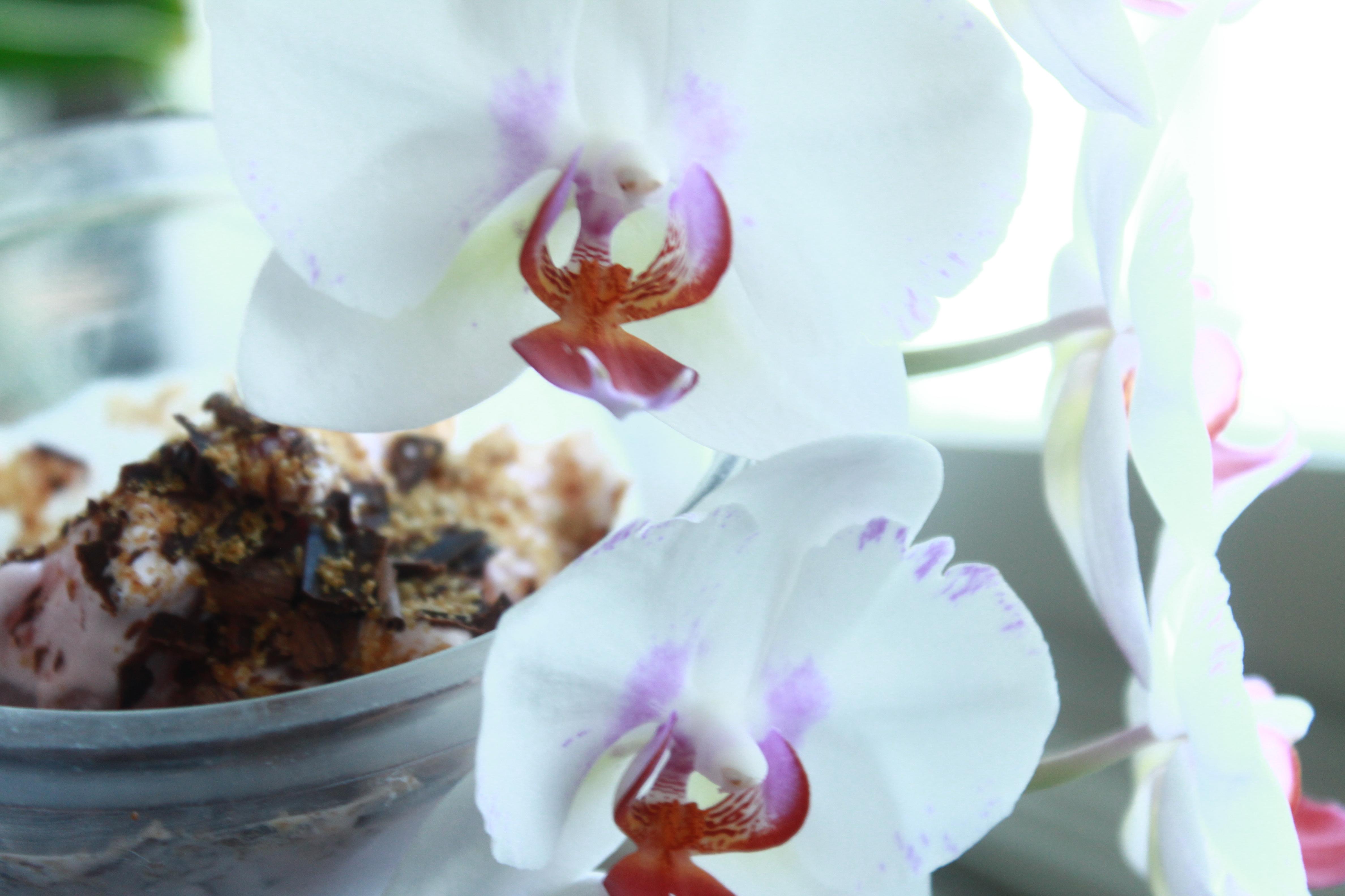 jäätelö, orkidea (3).JPG