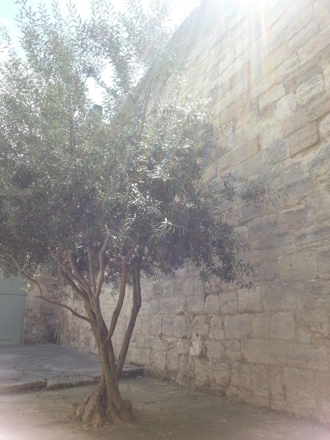 Vapaapäiväterveiset Avignonista