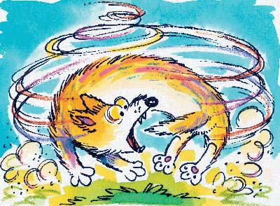 dog-chasing-tail.jpg