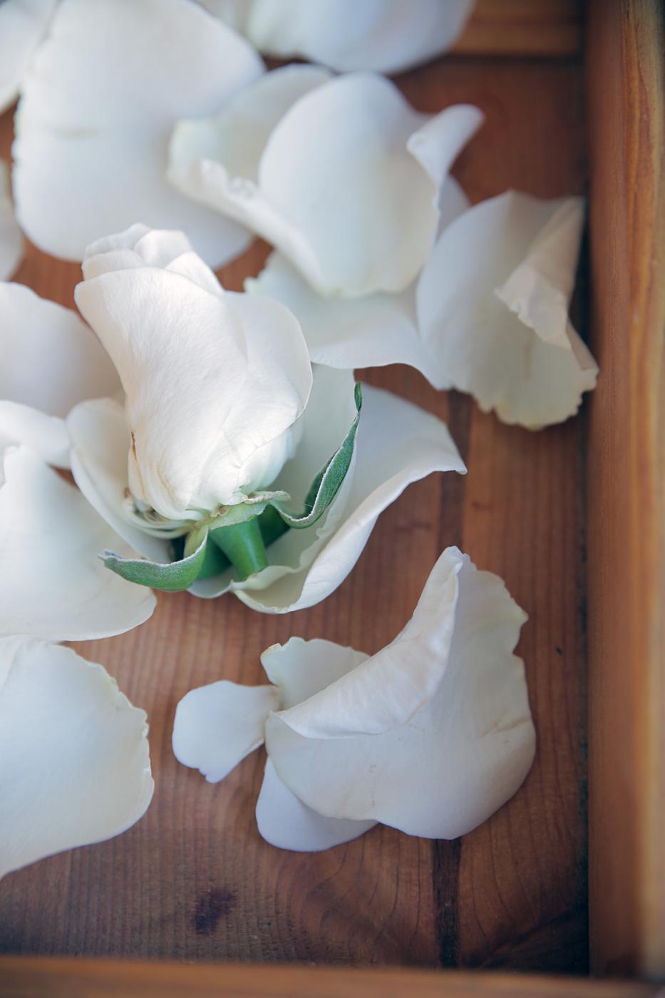white-rose-aromatherapy.jpg