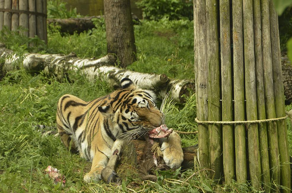 29 kuvaa juhannuksesta ihmisten ja eläinten seurassa