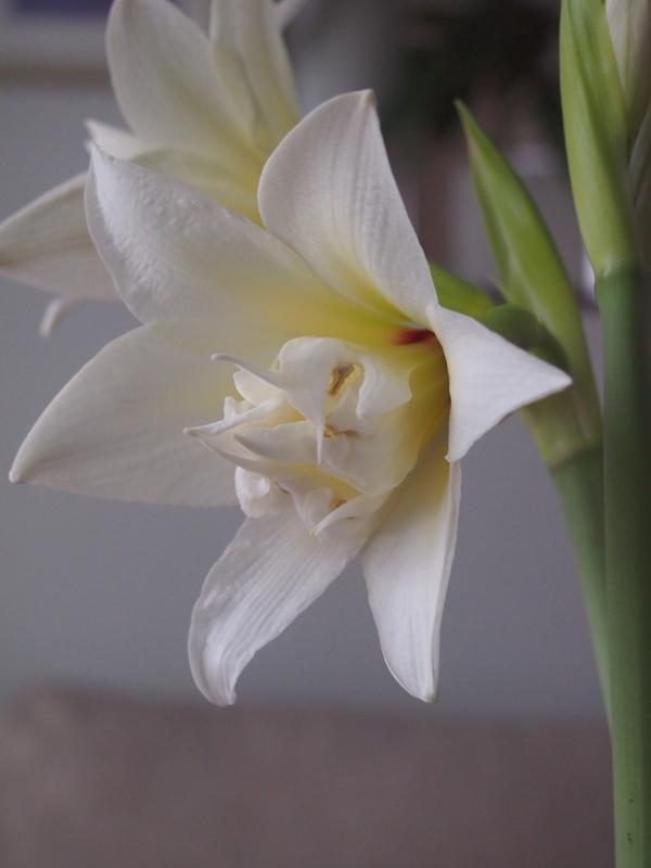 Kukkia, kuumetta ja sisustuspulmia