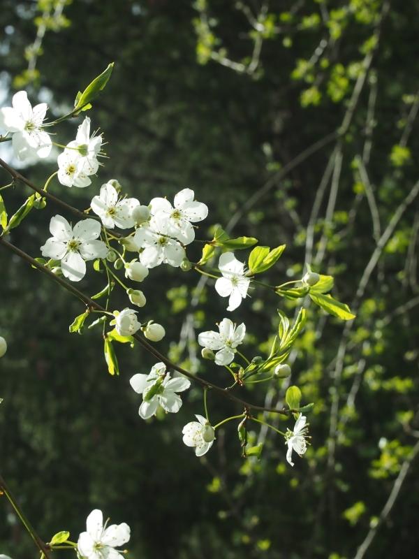 Päivän kukkija naapurissa