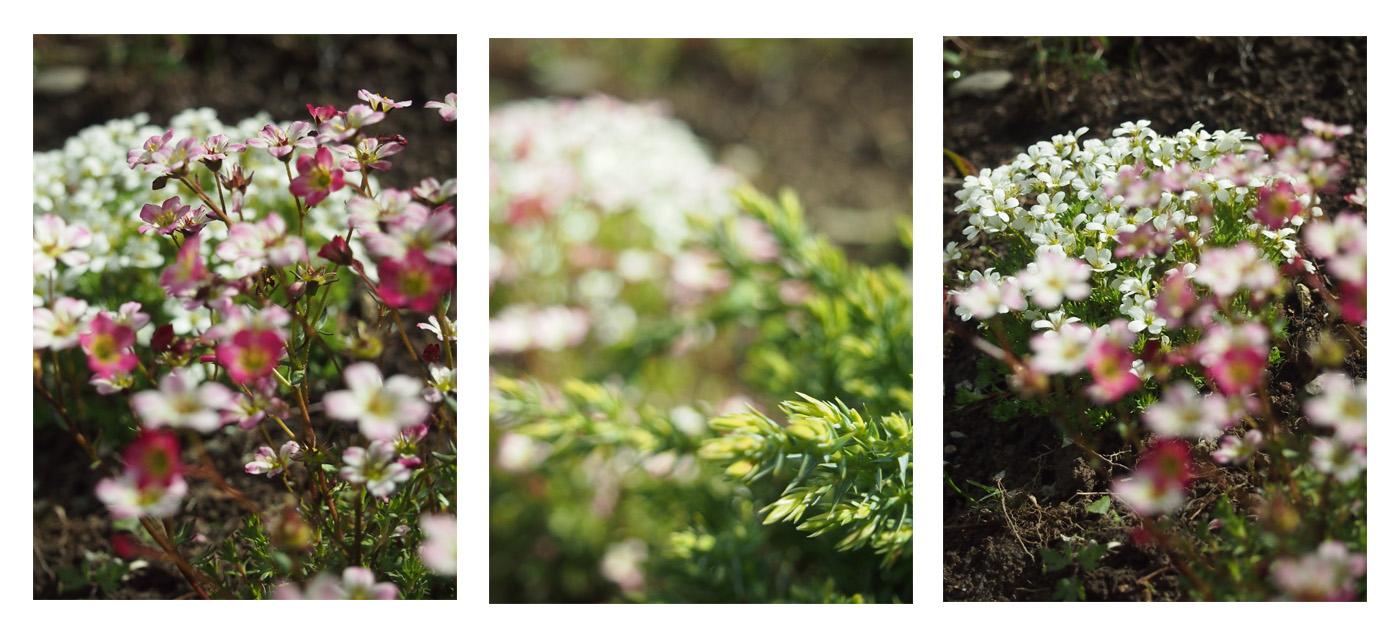 Kevätpuuhia