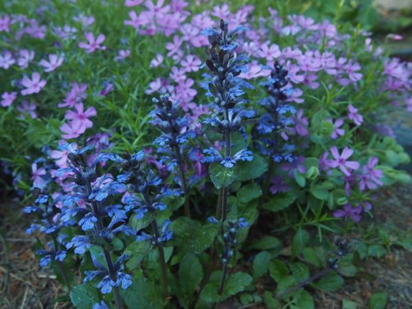 Päivän kukkija: rentoakankaali + muutama muu